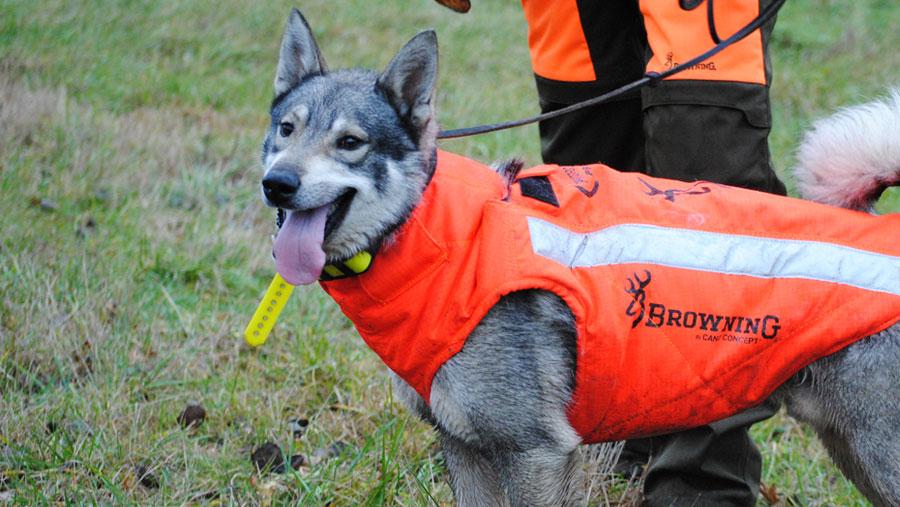 Protections pour chiens de chasse