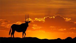chasse-en-afrique-blog-browning