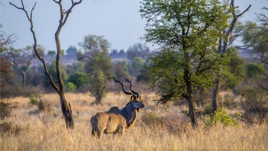 kudu-africa-blog-browning