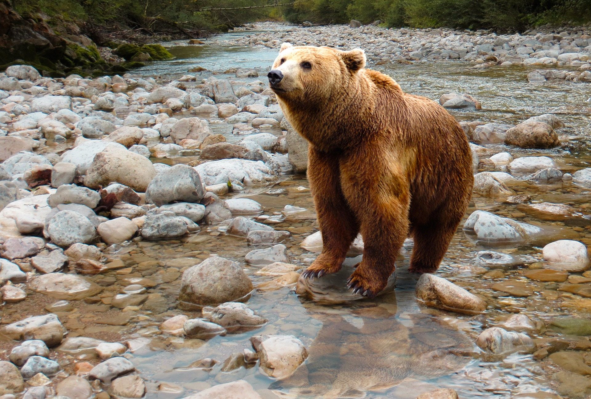 browning voyage chasse ours alaska