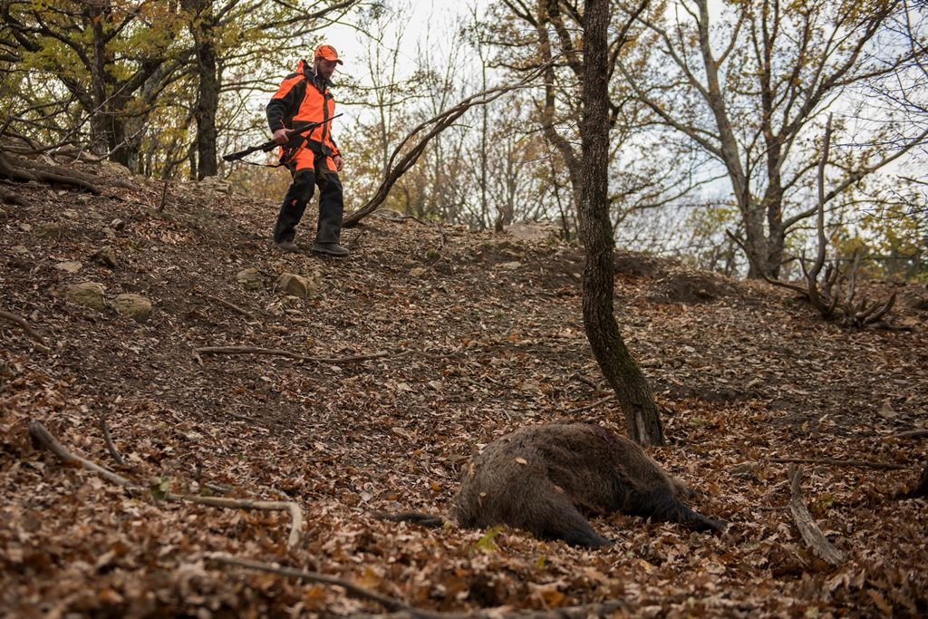 Browning blog - Chasse sanglier Maral Italie