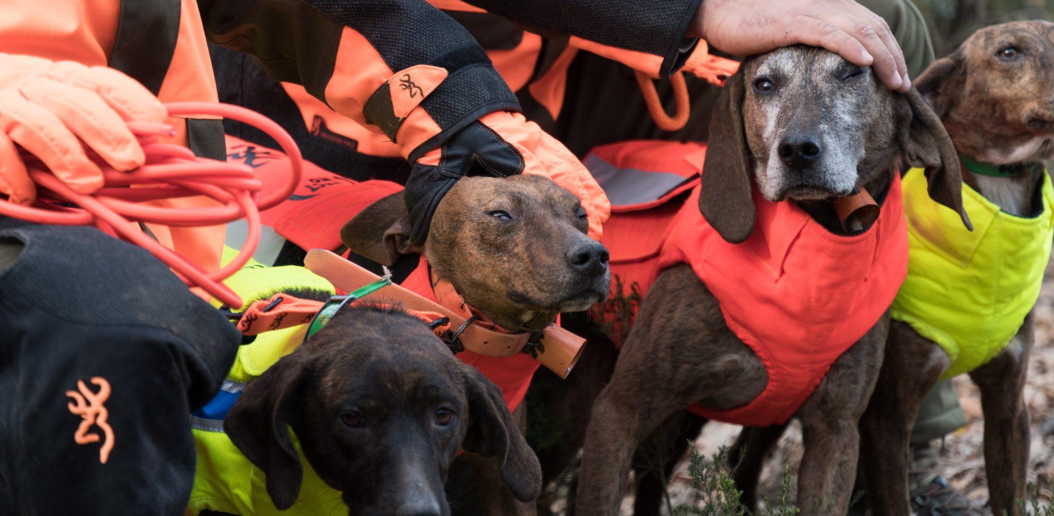 Browning blog - Le chien de chasse : notre meilleur ami et allié