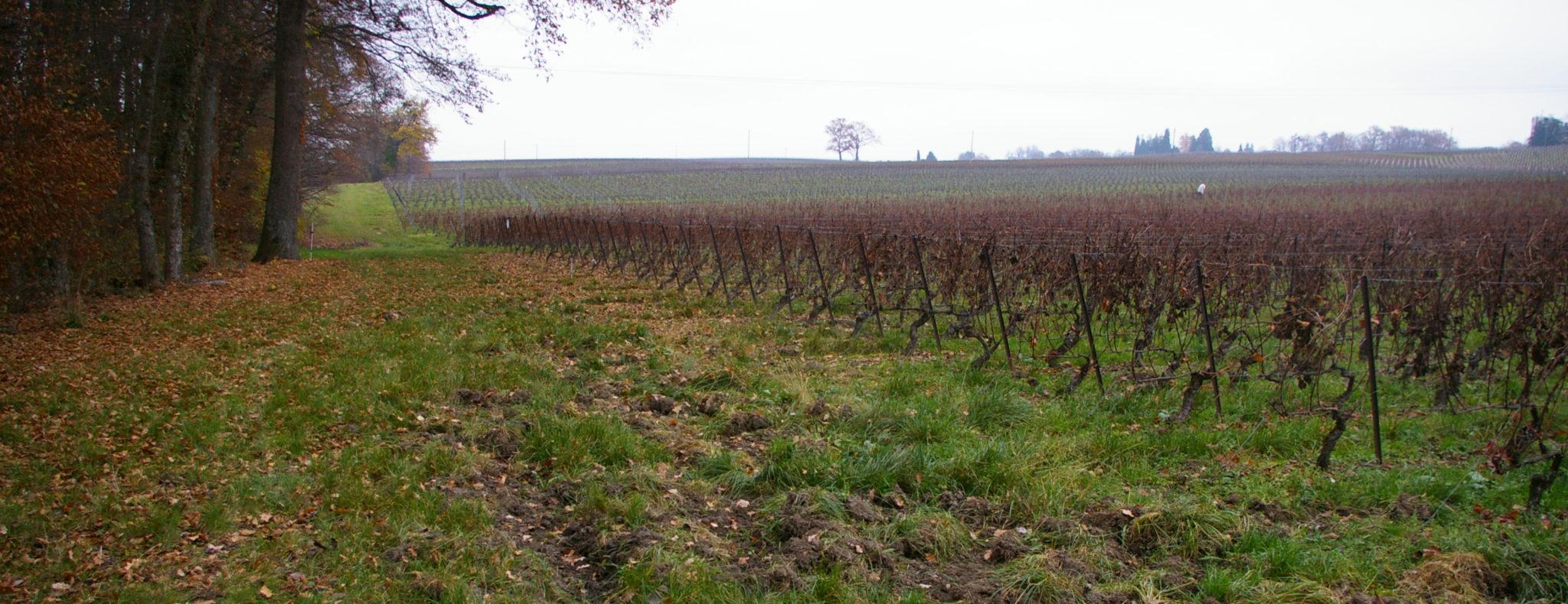 Blog Browning : Genève sans chasse, entretien avec Manue Piachaud